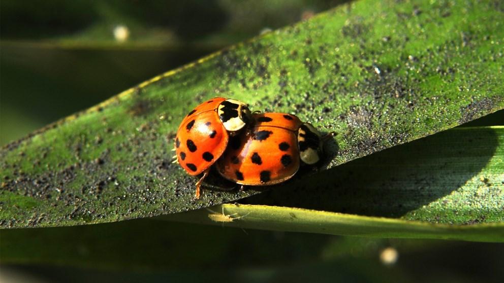 gruppe sex sex i naturen