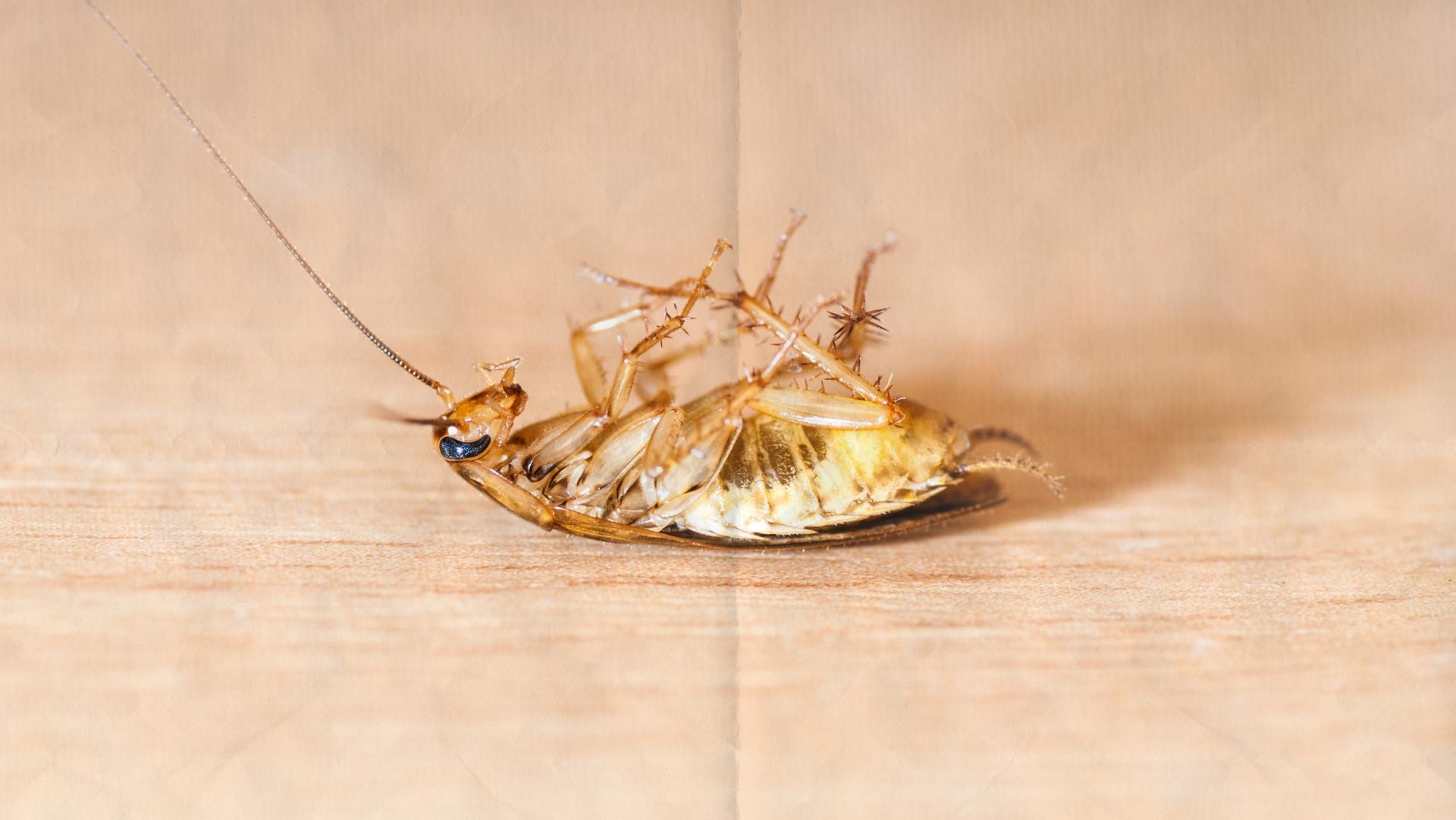 hvad kan myg ikke lide